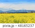 【菜の花畑 小田急線 特急ロマンスカー 60000形 MSE】 48165237