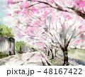 桜 桜並木 春のイラスト 48167422