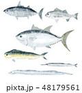 魚 魚類 白バックのイラスト 48179561