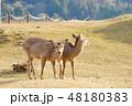 鹿 若草山 山頂の写真 48180383