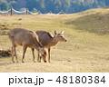 鹿 若草山 山頂の写真 48180384