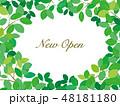 白バック ニューオープン 若葉のイラスト 48181180