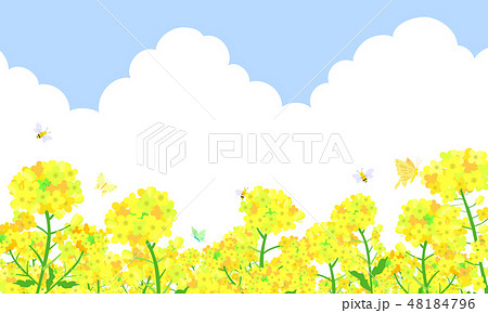 菜の花畑 蝶々 蜜蜂 48184796