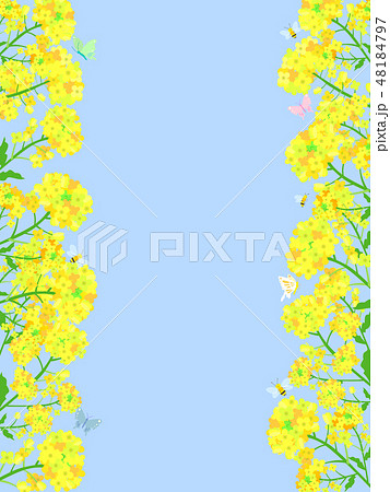 菜の花フレーム 05 48184797