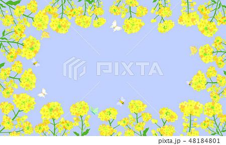 菜の花フレーム 07 48184801