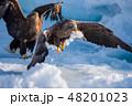 知床 冬 48201023