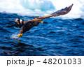 知床 冬 48201033