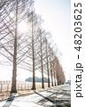 冬 木 並木の写真 48203625