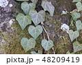 ハートマークの木の葉 48209419