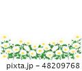 マーガレット 花 植物のイラスト 48209768