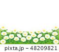 マーガレット 花 植物のイラスト 48209821