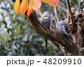キャンベルタウン野鳥の森 48209910