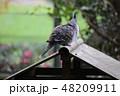 キャンベルタウン野鳥の森 48209911
