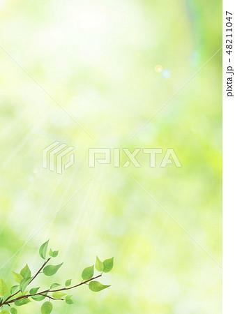新緑-葉-グリーン-逆光-さわやか-フレア-サンライト 48211047
