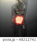 ヒューマン 人体 解剖学のイラスト 48212741