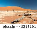 ナミビア ナミブ砂漠 死の沼 デッドフレイ 48216191