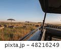 タンザニア サファリ セレンゲティ国立公園 ヌーの群れ 48216249