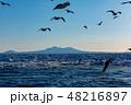 羅臼 流氷 鷲の写真 48216897