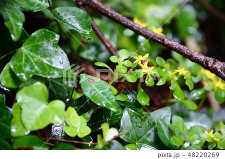 雨上がりの緑 48220269