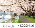 桜 春 花の写真 48222410