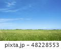 草原と青空 48228553