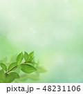背景 新緑 春のイラスト 48231106