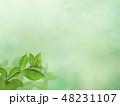 背景 新緑 春のイラスト 48231107
