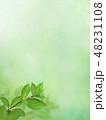 背景 新緑 春のイラスト 48231108