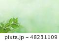背景-新緑-グリーン-春-夏 48231109