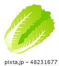 白菜 48231677