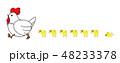 かわいい ニワトリ ヒヨコのイラスト 48233378