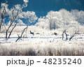 北海道 樹氷 シカの写真 48235240