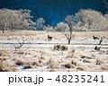 北海道 樹氷 シカの写真 48235241