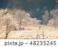 北海道 樹氷 シカの写真 48235245