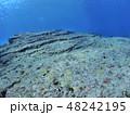 与那国島 海底遺跡 48242195