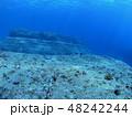 与那国島 海底遺跡 48242244