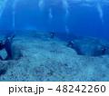 与那国島 海底遺跡 48242260