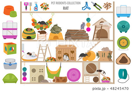 Pet rodents home accessories icon set flat style 48245470