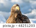 オジロワシ ワシ 鳥の写真 48251203