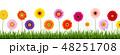 デイジー ヒナギク ガーベラのイラスト 48251708