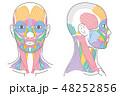 顔と首回りの筋肉 正面 側面 48252856