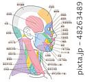 顔 筋肉 図のイラスト 48263489