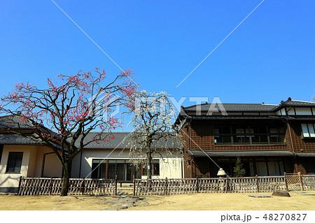 肥後細川庭園の松聲閣と梅の花(2月)東京都文京区 48270827