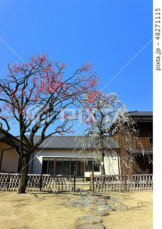 肥後細川庭園の松聲閣と梅の花(2月)東京都文京区 48271115