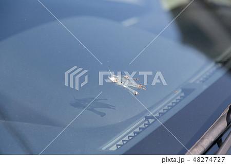 フロントガラスの鳥のフン 48274727
