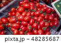 ミニトマト アイコ 48285687