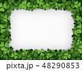 クローバー フレーム グリーンのイラスト 48290853