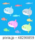 かわいい 海水魚 マンボウのイラスト 48290859