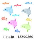 かわいい 海水魚 マンボウのイラスト 48290860