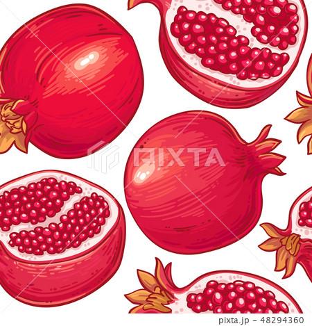pomegranate vector pattern 48294360